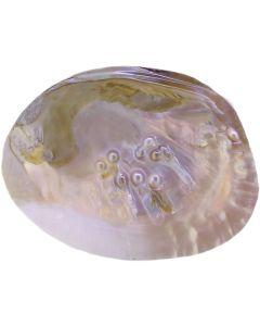 Perlenmuschel Seifen-/Schmuck-Schale